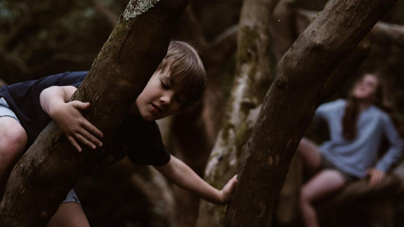 children playing in trees